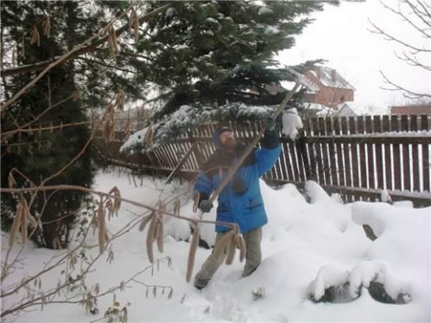 Снег на ветках деревьев
