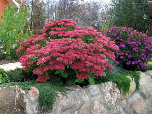 Какие низкорослые цветы посадить в клумбу, чтобы цвели все лето