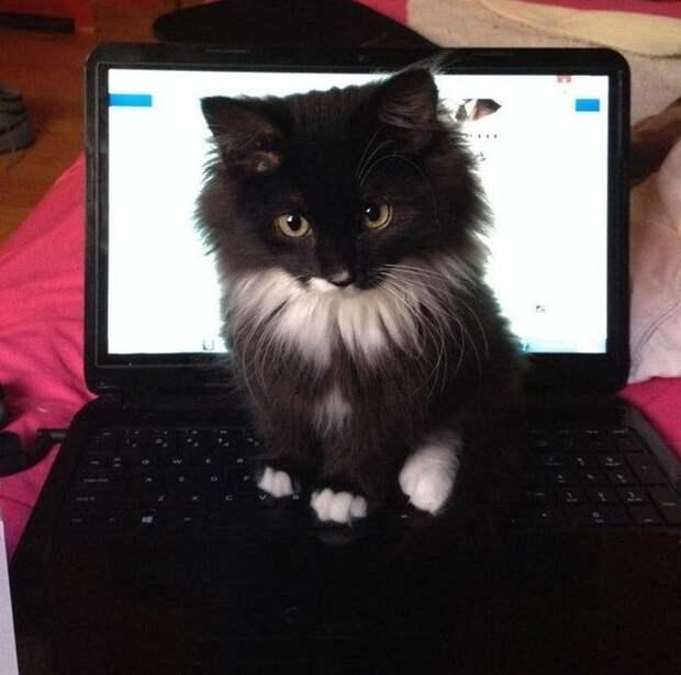 20 человек, которые завели кота и навсегда забыли о понятии «личное пространство»