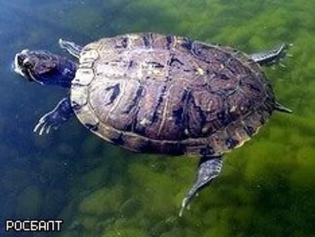В заповеднике в Воронежской области массово вымерли черепахи