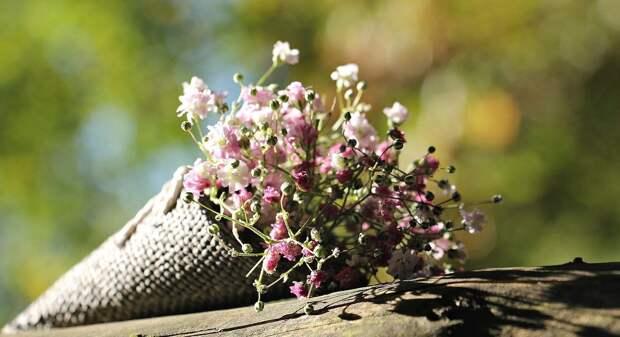 В Удмуртии уничтожили партию заражённых цветов