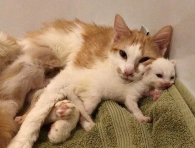 Кошка-мать всеми силами защищала котят, несмотря на свое состояние