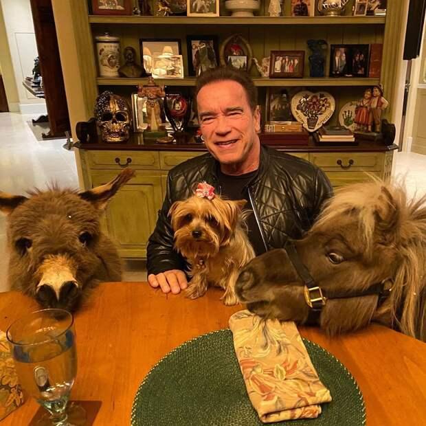 Арнольд Шварценеггер сидит на карантине в компании осла, пони и собаки