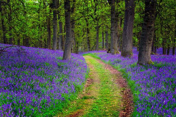 scotland14 24 фото, которые станут причиной вашей поездки в Шотландию