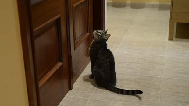 """5. """"Никаких закрытых дверей. Моя кошка орет как сумасшедшая, видя закрытую дверь на своем пути,""""  — Chimerical_Shard животные, забавно, забавные животные, истории, питомцы, подборка, собаки, хозяева"""