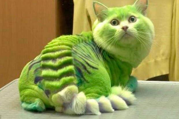 Самые опасные породы кошек