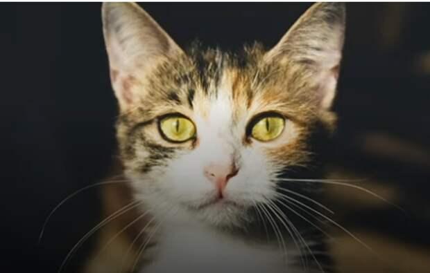 Мужчина в 101-й раз позвал своего кота и услышал слабый ответ. Лишь на четвёртый день хозяевам чудом удалось найти его