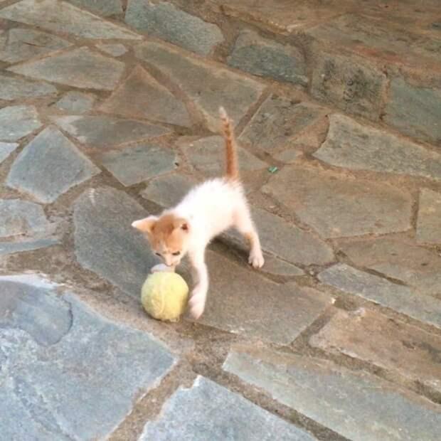 """Тощий уличный котенок, полюбивший играть с мячиком, вырос в кота-""""футболиста"""""""