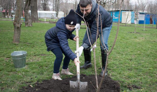 Ростовчане остались недовольны после высадки 200тыс деревьев