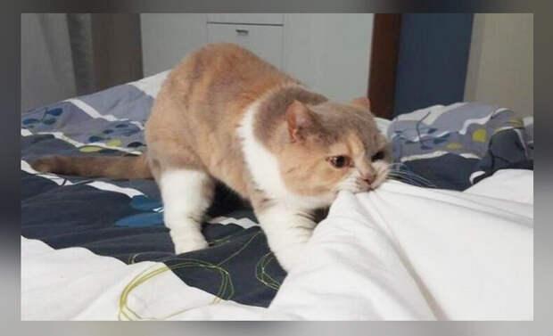 В детстве меня укладывала и поднимала кошка, но мама потом раскрыла весь секрет