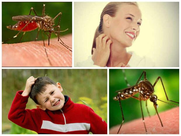 Теперь я знаю, почему комары кусают меня больше других