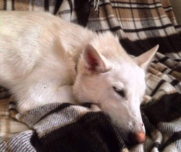 Дети «поиграли» с бездомным щенком, из-за чего он лишился глаза. Но даже это не помешало ему быть любимым