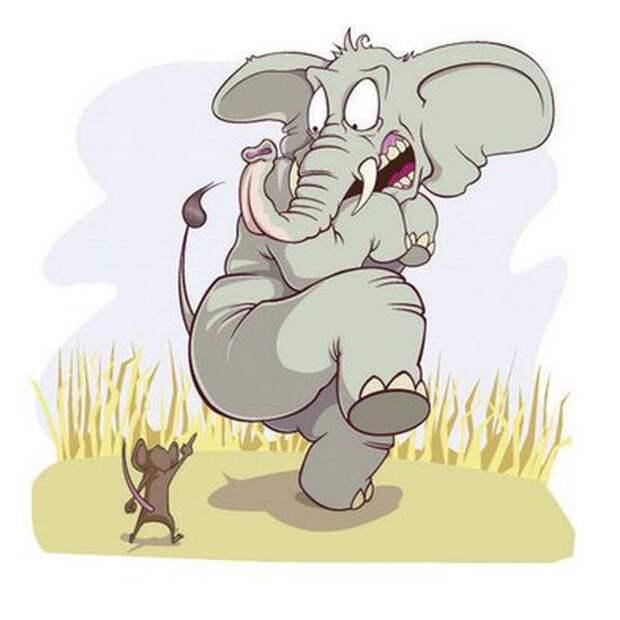 Амбарный мышак Алолеша в роли слона