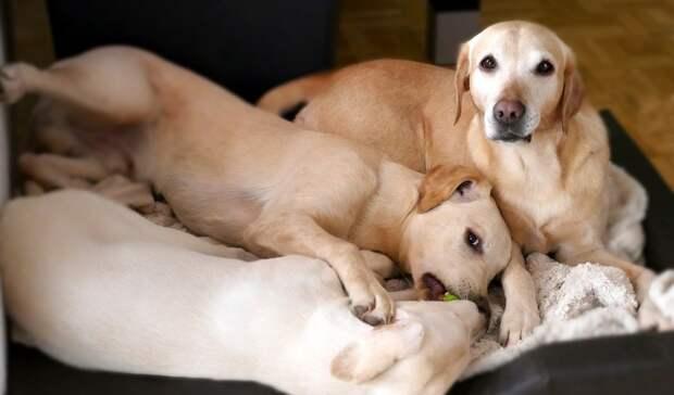 Вонь и лай: омичка через суд добивается выселения соседских собак