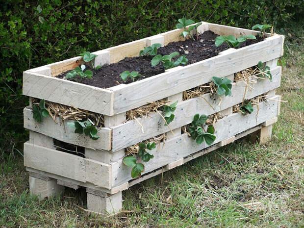 Как сделать ящик для клубники из деревянного поддона