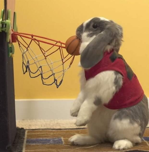 Мировой рекорд кролика-баскетболиста