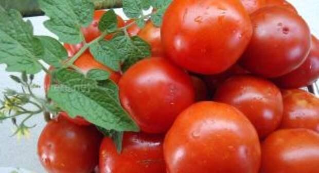 В Украине вырастили необычные томаты