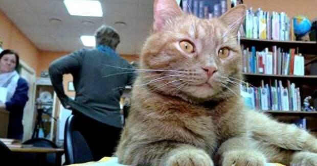 ВТверской области живодер убил единственного вРоссии кота-библиотекаря