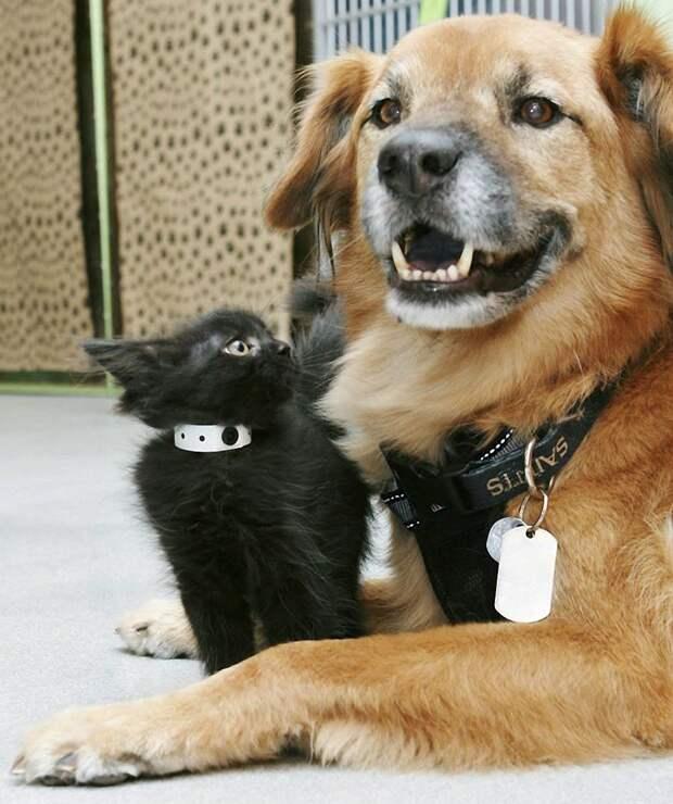 Пёс Бутс который работает кошачьей няней-5