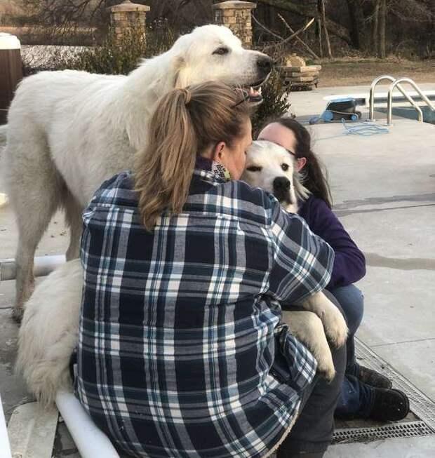 Семья вынужденно оставила собаку дома за мгновение до торнадо