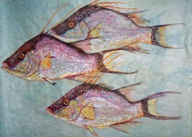 7 странных рисунков Гиотаку. Вместо кисти художники используют рыбу