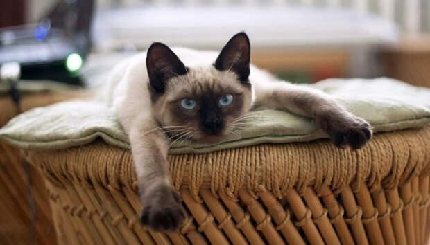 Названы причины, почему кошка может невзлюбить хозяина