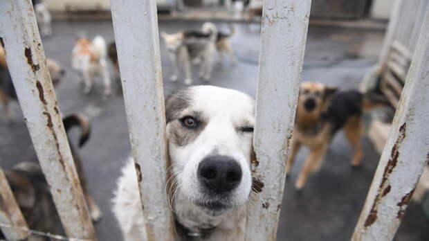 Проследил за скорой: Пёс неделю ждал своего больного хозяина у двери больницы