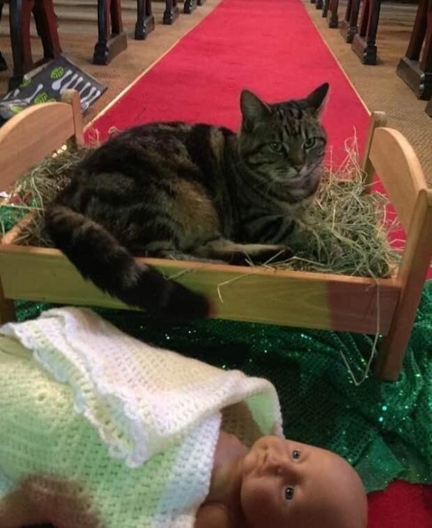 Рождественская история в новом формате весело, коты, повадки, смешно, эмоции
