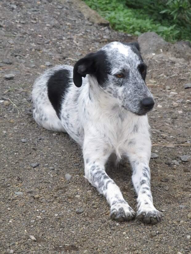 собака. фото из личного архива