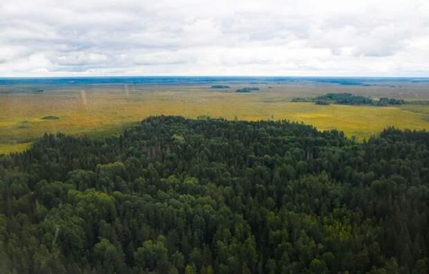 Лесной фонд Тверской области увеличился почти на 30 тысяч гектаров