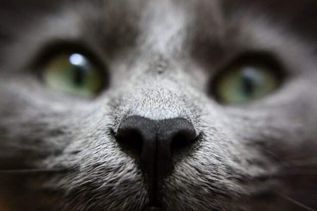 10. домашние животные, животные, коты, кошки, морда, нос, носики, фото кошек