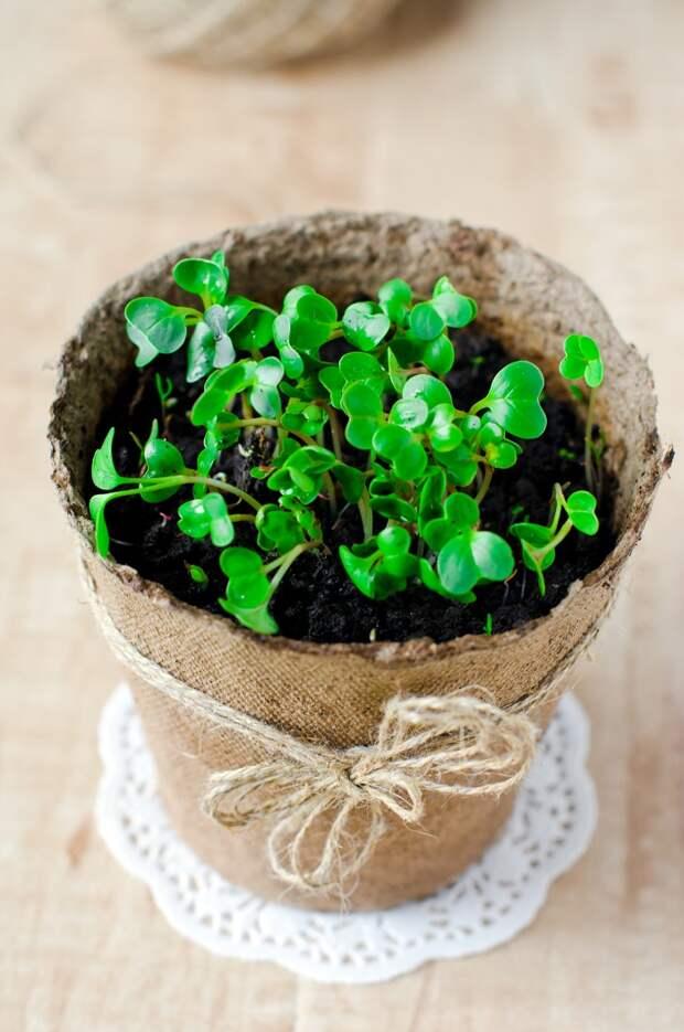 польза зелени при похудении