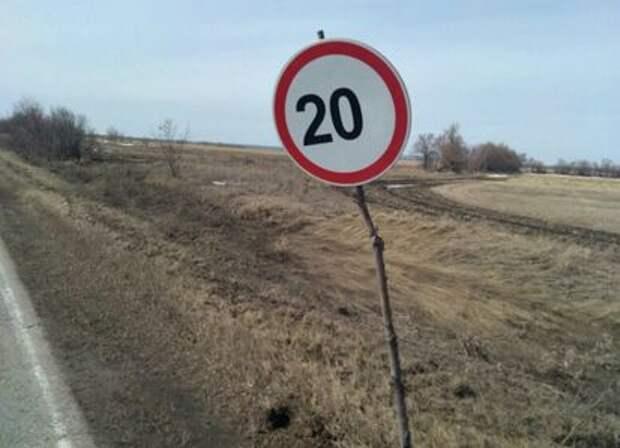 Дорожные знаки на спиленных ветках. Экономия или шутка?