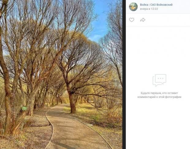 Фото дня: природа парка «Покровское-Стрешнево»