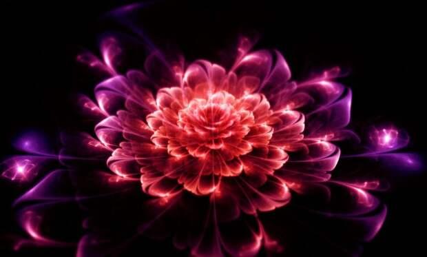 Комнатные цветы, которые помогут в любви