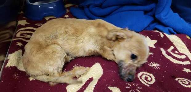 Мужчина спас щенка, выброшенного под мост со скотчем на мордочке