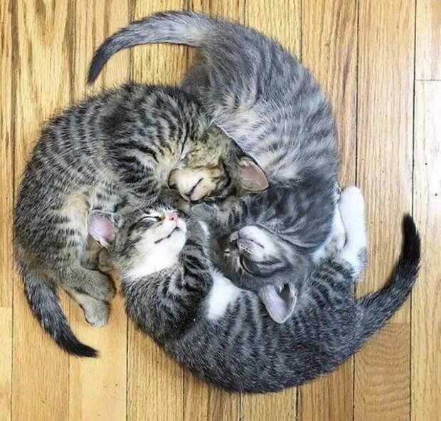 Эти коты доказывали, что для сна не существует неудобных мест и поз