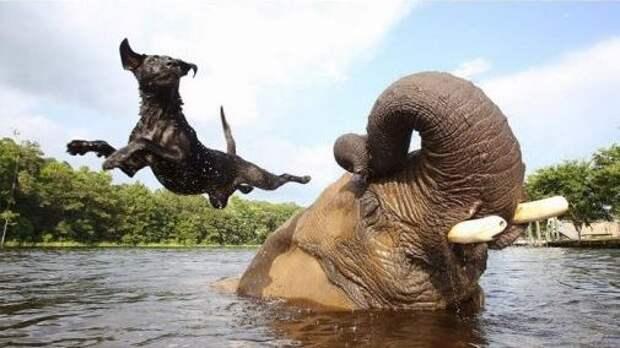 11 фото животных, которые непонятно как подружились