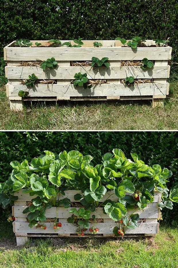 40+ замечательных идей, как обустроить маленький сад на участке