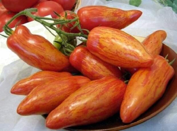 полосатые томаты лучшие сорта фото отзывы