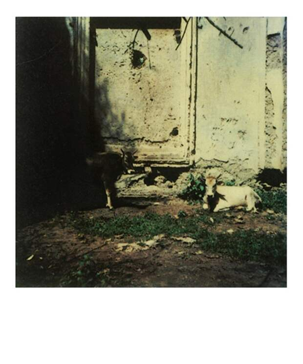 Полароидные снимки Андрея Тарковского
