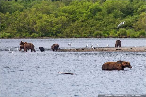 Камчатцы показали, чем они защищаются от медведей, если идут в лес без ружья