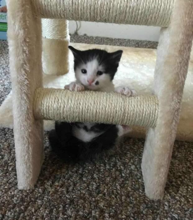 Беременная кошка, брошенная в приюте, родила особенного котенка история, история спасения, котята, кошка, кошки, спасение животных, трогательно