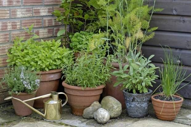 Время сеять ароматные травы. Попробуйте руту и эстрагон!