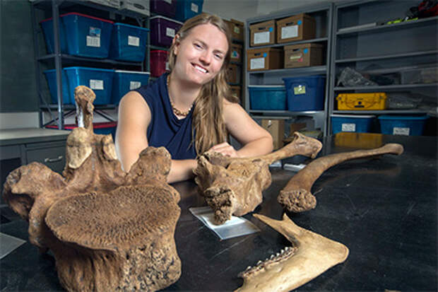 В США обнаружена древнейшая на континенте стоянка человека