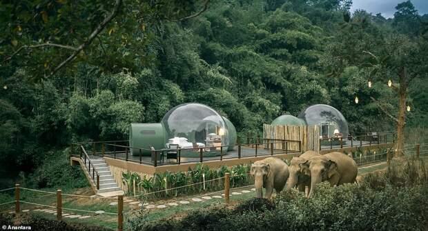 В Таиланде отель предлагает остановиться в прозрачных номерах-пузырях