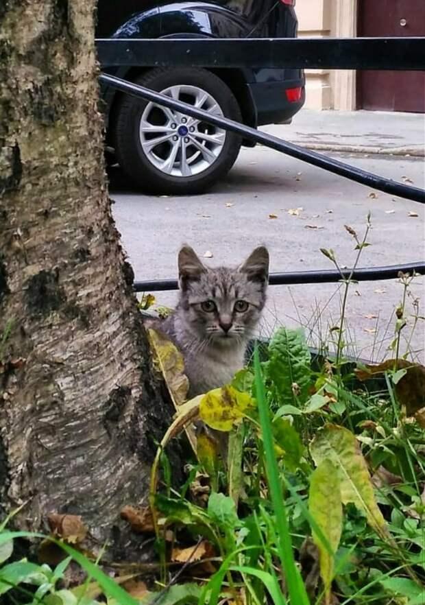 Живёт котёнок на улице, ему даже спрятаться негде. Спит в траве. Очень просим вас, помогите!!! Пропадёт ведь кошачья душа...