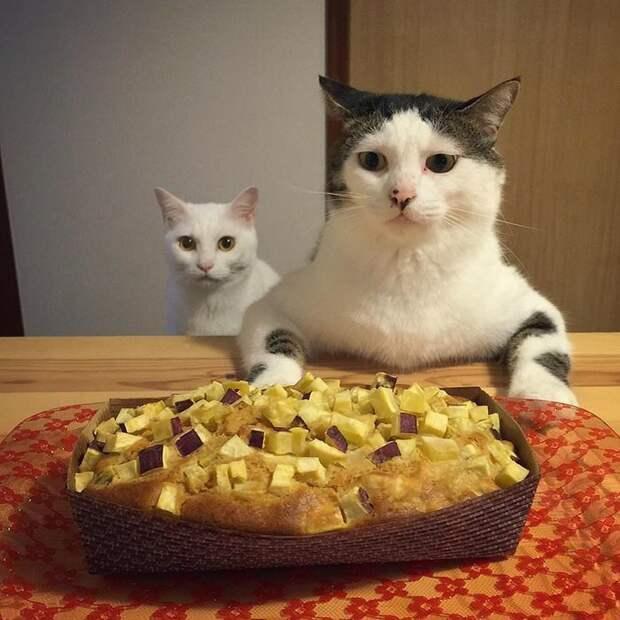 Что-то странное. Неужели на диету садиться удумали, изверги? дегустация, еда, животные, кот, коты, позитив, реакция, юмор
