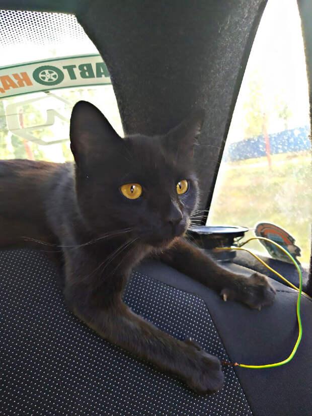 Сергей постоянно катает бездомную кошку Чернушку на машине, чем вызывает недоумение у соседей