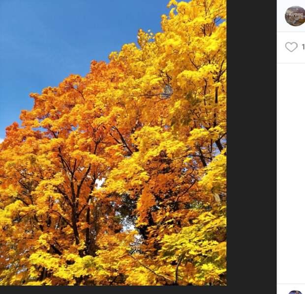Фото дня: золотая осень на улице Кашенкин Луг